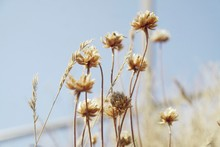 Close-up Of Flowering Plants O...