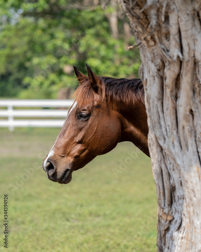 horse by the tree