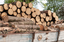 Logs Of Fuel Wood On An Old Tr...