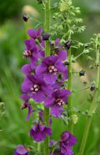 Flower I Bloom Purple Detail Green Garden Blurred Backround