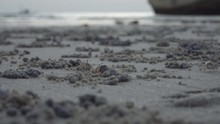 Small Crabs Dig Tunnels In The...