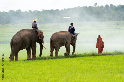 Elephants in the rice fields and monks who receive alms in the morning Canvas Print