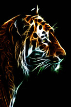 Abstract Illustration Of A Tigers Face Illustrated In Light On A Black Background.