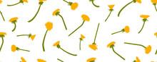 Yellow Dandelions Flowers, Sea...