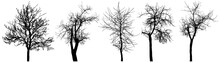 Bare Trees (chestnut Tree, App...