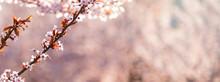 Cherry, Sakura, Apricot, Almon...