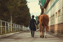 Rider Woman With The Horse Are...
