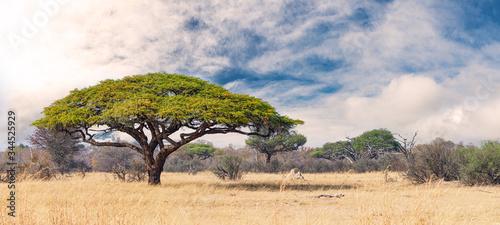 Fototapeta African landscape in the Hwange National Park, Zimbabwe