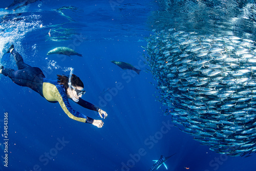 deiver with Striped marlin and sea lion hunting in sardine bait ball in pacific Canvas Print