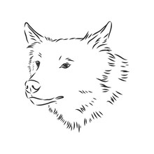 Vector Image Of Wolf's Head Is...