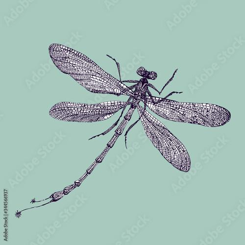 Vector isolated hand drawn elegant dragonfly on light aquamarine background Canvas Print