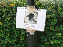 Close-up Of Missing Dog Poster...