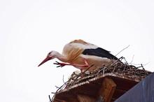 Storch, Weißstorch, Nest, Vog...