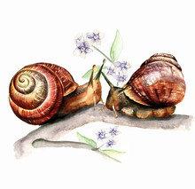 Watercolor Print Of A Snail I...