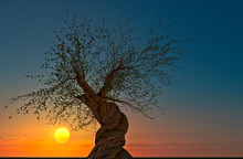 Environment, Nature Reclaims I...