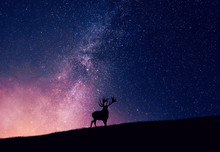 Silhouette Reindeer On Field A...