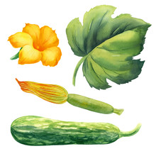 Watercolor Illustration Vegeta...