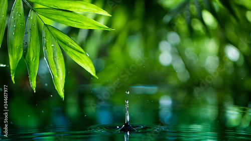 Fotomural fresh green leaves with water drops over the water , relaxation with water rippl