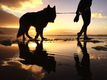 Silhouette Woman With German Shepherd Walking At Beach During Sunset