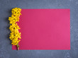 Leinwanddruck Bild - Creative layout made with forsythia flowers on bright pink background. Flat lay. Spring minimal concept
