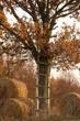 Ucieczka na drzewo
