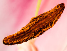 Macro Photos For Flowers Part