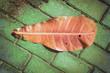 Jesienny brązowy liść na chodniku.