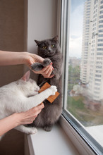 Comb Out The Cat Care At Home ...