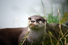 Close-up Of Otter On Field