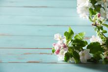 Close Up On Fresh White Spring...