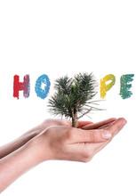 Hand Holding Tree On Globe Bes...