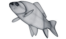 Crucian Fish Polygonal Lines Illustration. Abstract Vector Fish On The White Background