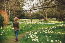 Rear View Of Woman Walking Amidst Daffodils Blooming On Field