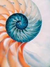 Close-up Of Nautilus Shell