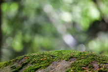 Mossy Forest Background. Moss Covered Rock At Blured Mountain Woods Green Landscape. Nature Ecology Wallpaper Concept