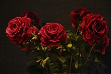 View Of Red Flowers Against Colored Background