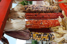 Close-up Of Indian Corns Hanging For Sale