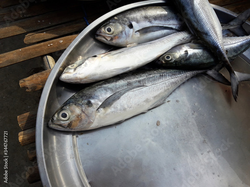 Fotografija Torpedo or Hardtail or Finletted mackerel scad fish  in a steel tray on a bamboo