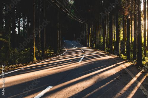 Fototapeta Kyushu Forest obraz na płótnie