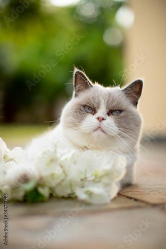 fluffy white cat with white flower Fotobehang