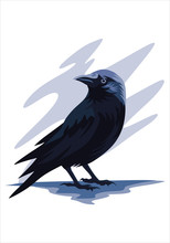 Crow For Background And Illust...