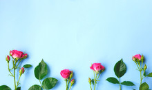 Pink Roses Flowers On A Blue B...