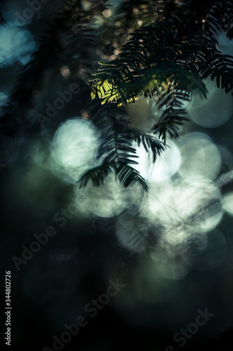 Sun reflecting in the thorns of a fir tree, blurred background allowing text to be inlaid Fototapeta