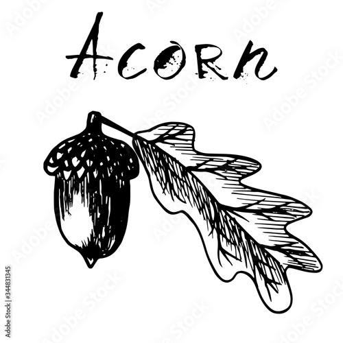 Black traced sketch of an acorn with a leaf Wallpaper Mural
