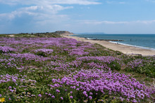 Spring Flowers On Southbourne Clifftop
