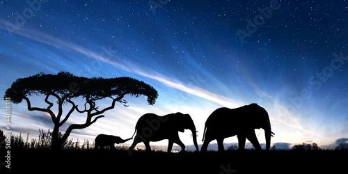 Family of elephants at dusk