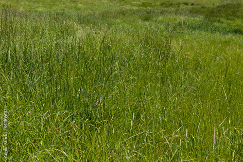Photo Backdrop of lush meadow grasses, green with a variety of textures, horizontal as