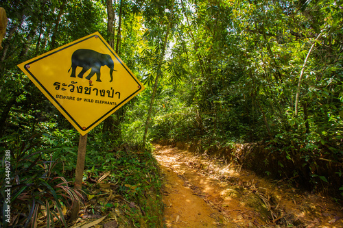 Photo Beware of wild elephants sign in a rainforest in KhaoSok National Park