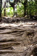 I Walk Through Dry Forest With...