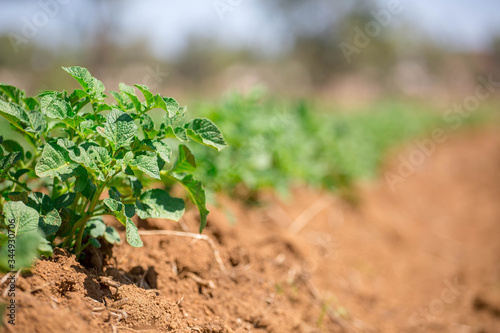 Photo green plant growing in the soil